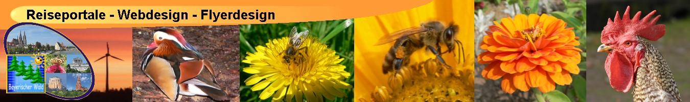 Flyerdesign Webdesign Homepage Erstellung und Musterbriefe