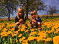 Blumenwiese Kinder Urlaub