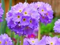 Naturbilder Bluete Blume - Digitale Fotos für Internet und Print
